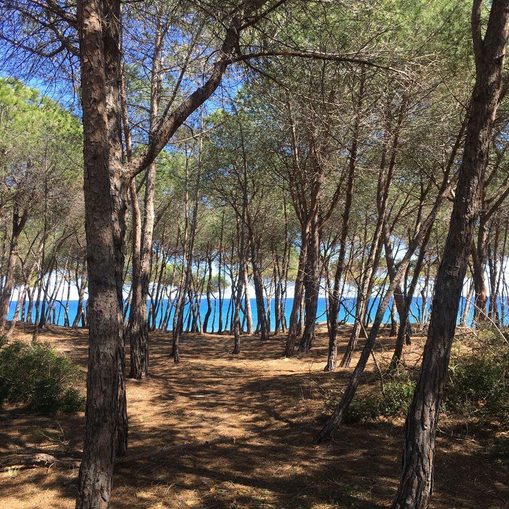129-Girasole-blog-3