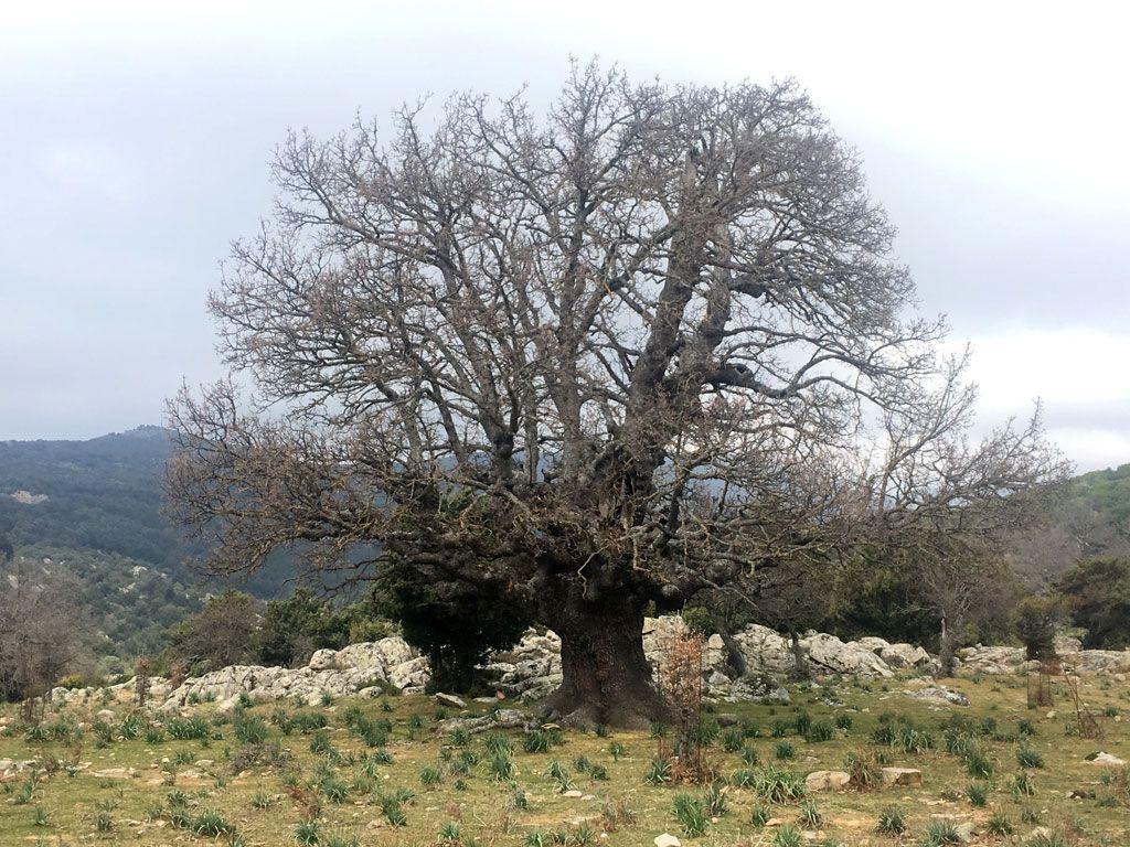 133-Talana-blog-2