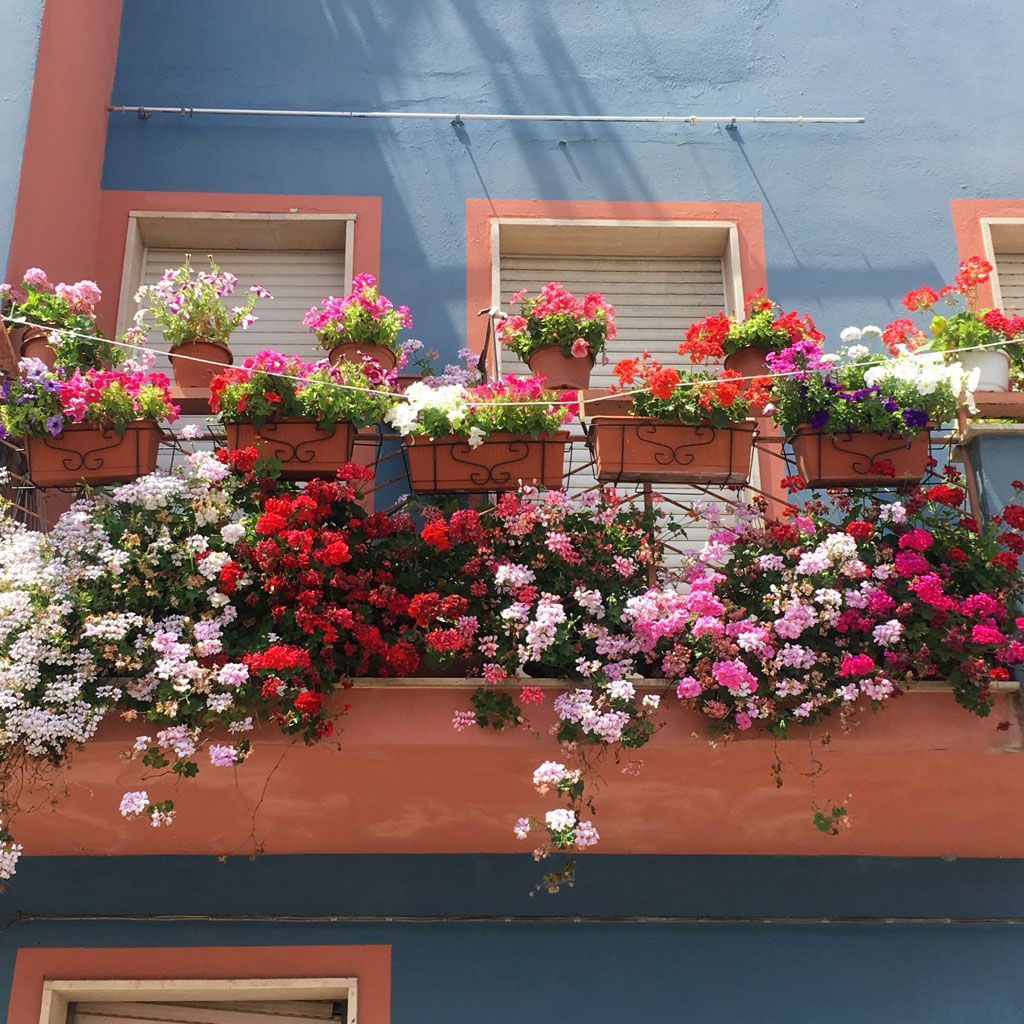 209-Florinas-blog-3