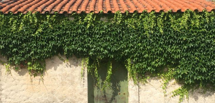 209-Florinas-blog-feature